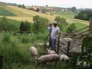 Rotstalden 2, Schweine
