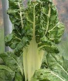 Rotstalden 4, Gemüse